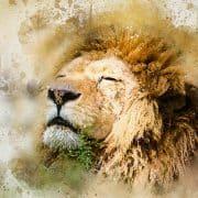 lion-1577197_640